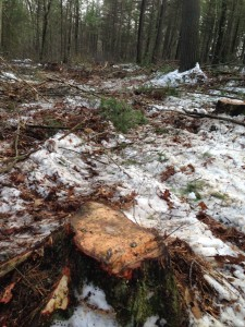 December 19, 2013 was the start of the tree thinning on the Edward D. Vock Conservation Area.