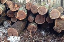 Tree harvest – Edward D. Vock Conservation Area