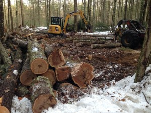 Hardwoods - oak mostly - get hauled into a pile.